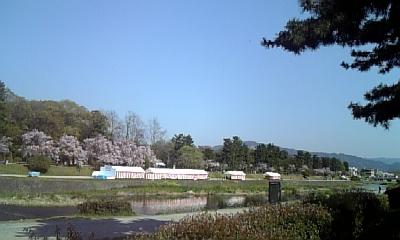 ☆北山でお花見☆